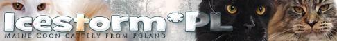 Icestorm*PL Maine Coon