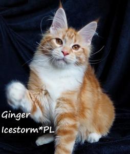 Ginger na sell