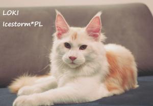 Loki4m71