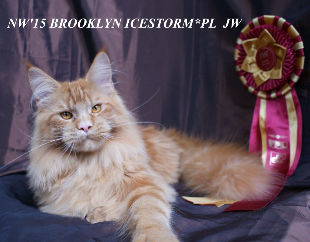 Brooklyn1711
